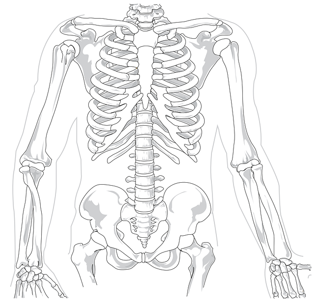 Dessin d'un squelette.