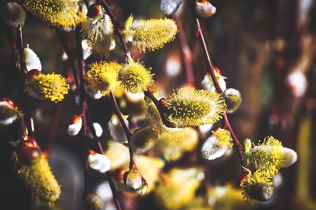 Fleurs avec pollen.