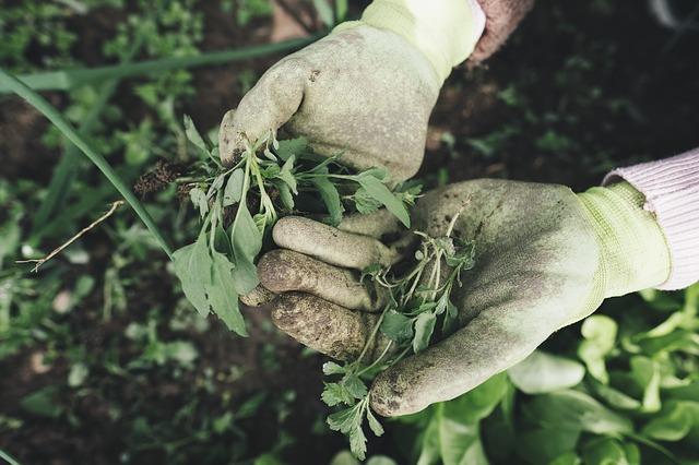 Mains de personne qui jardine.