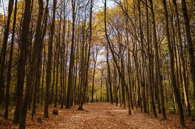 Balade en forêt pour lutter contre le stress.